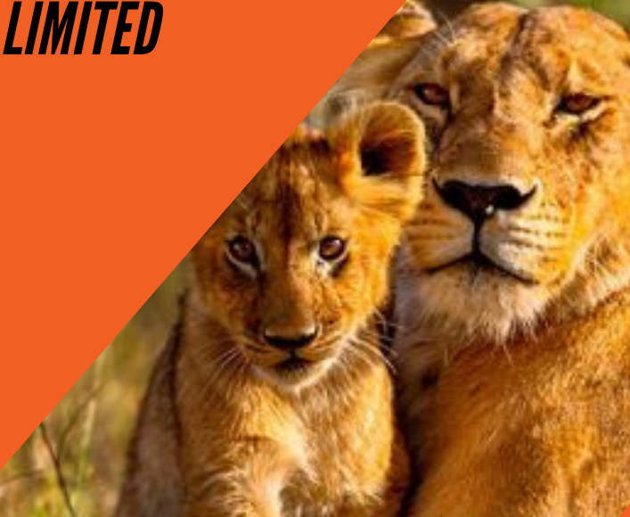 African Plateau Expedition & Safaris Limited